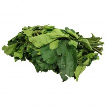 Fresh Ugu Vegetable leaf